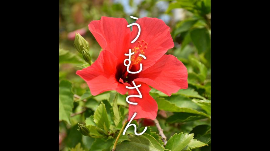 沖縄風ぴこぴこ楽曲「うむさん」youtube版を公開しました。